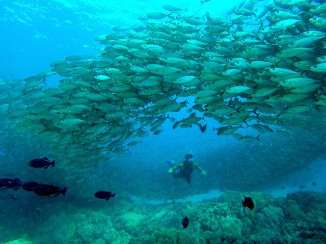 snorkel with fish maui