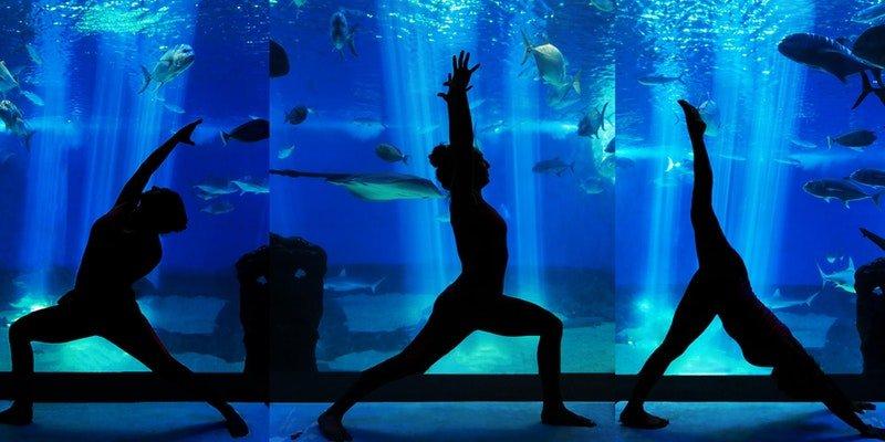 aquari-om