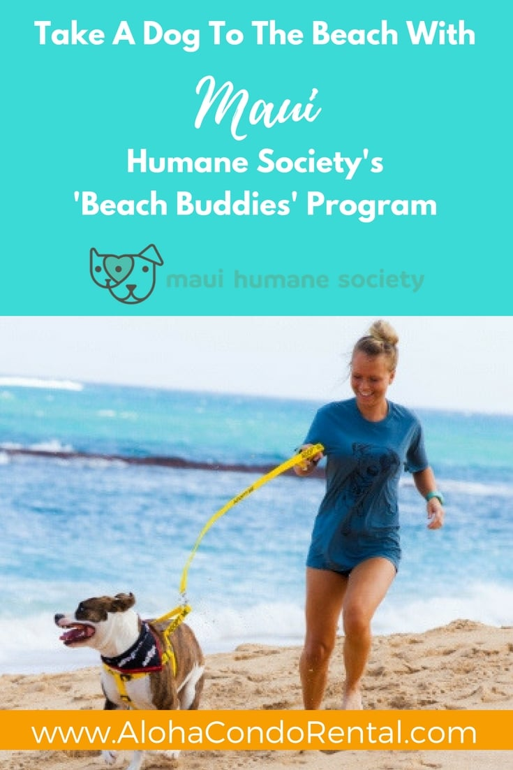 Take A Dog To The Beach With Maui Humane Societie's Beach Buddies Program - www.AlohaCondoRental.com Vacation Rental Maui