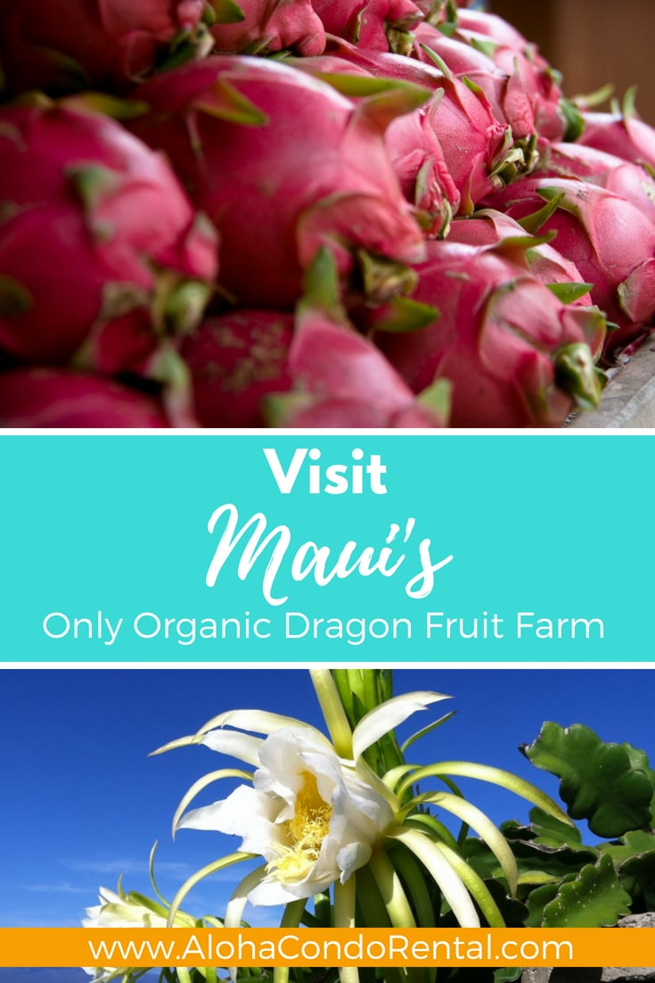 Organic Dragon Fruit Farm - www.AlohaCondoRental.com Vacation Rental Maui