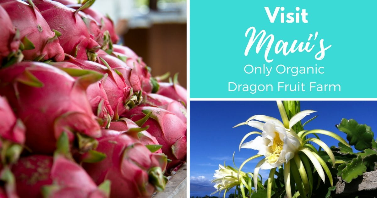 Organic Dragon Fruit Farm