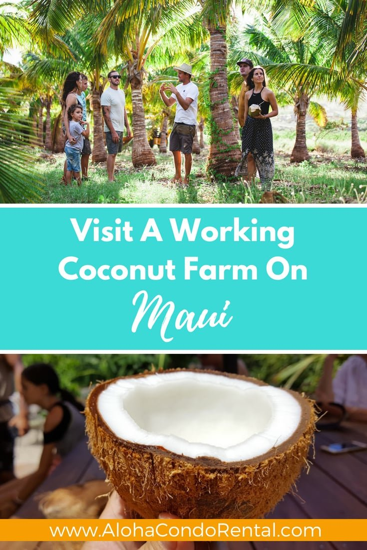 Visit A Working Coconut Farm On Maui- www.AlohaCondoRental.com Vacation Rental Maui