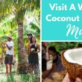 Visit A Working Coconut Farm On Maui