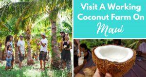 Visit A Working Coconut Farm On Maui